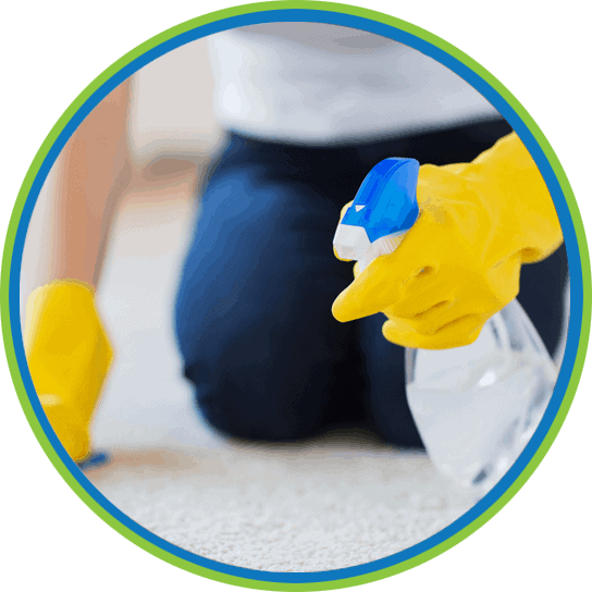 Carpet Dry Cleaning Services | ProDry Floor Care