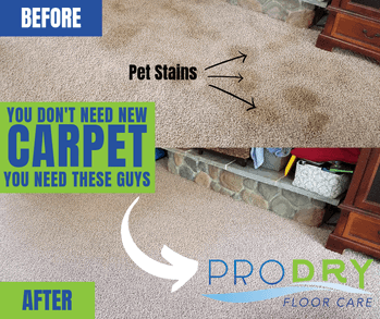 How To Get Rid of Pet Odor and Stains in Carpet